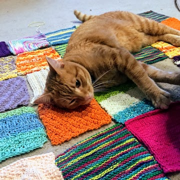 a cat laying on knitted squares